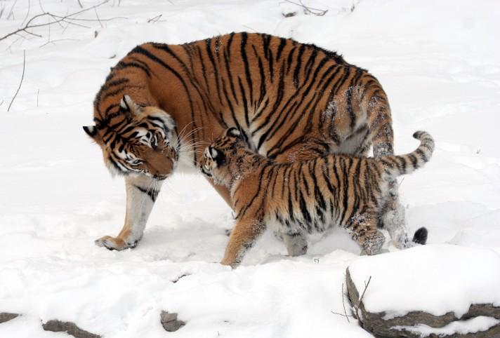 brooklyn new york qigong taichi tigers 4