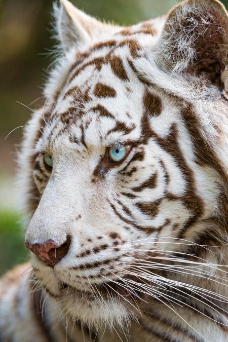brooklyn new york qigong taichi tiger 5